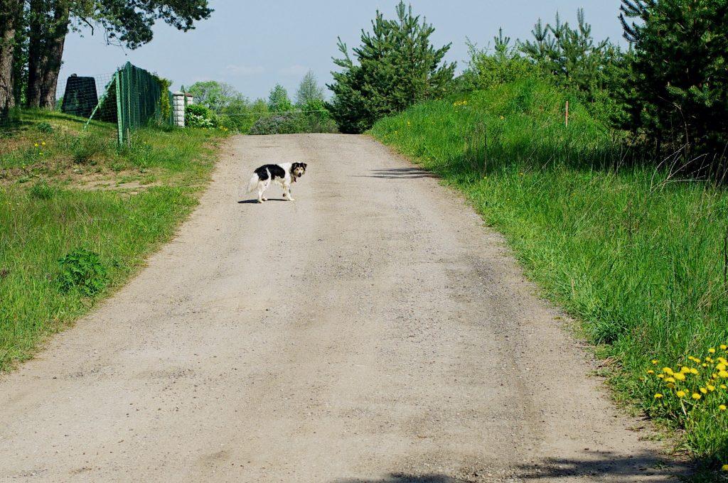 Kelias saugomas