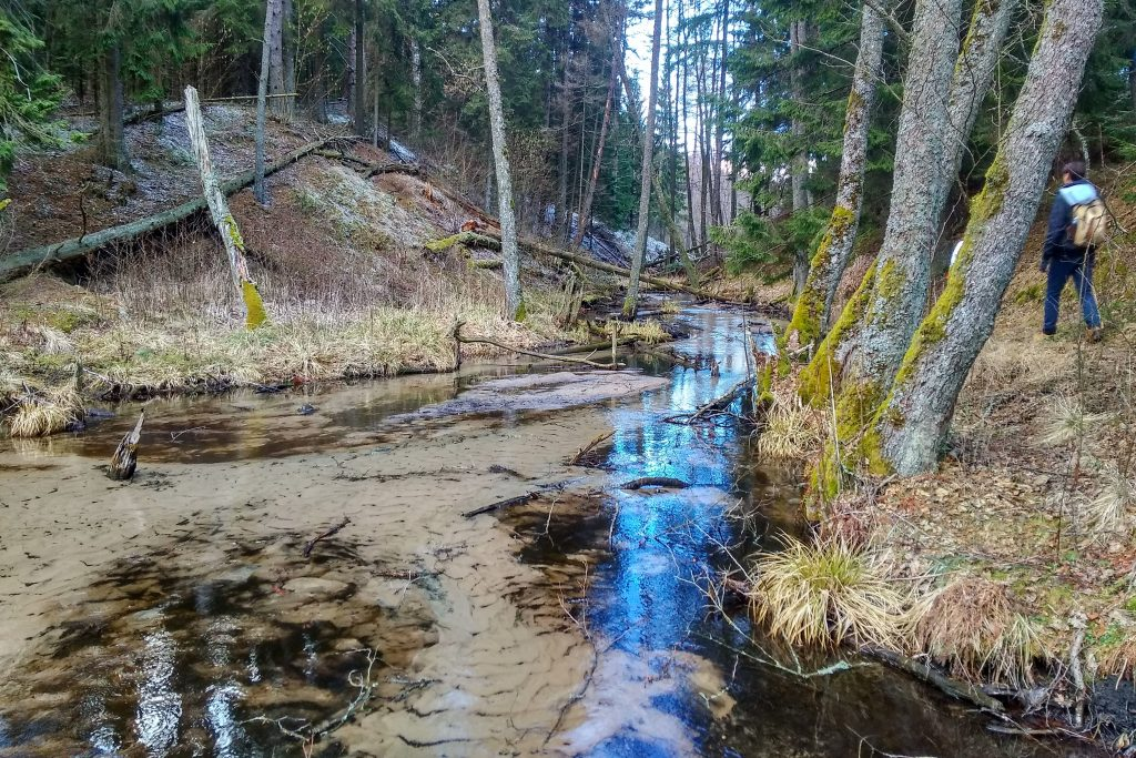 Bebrų upelis