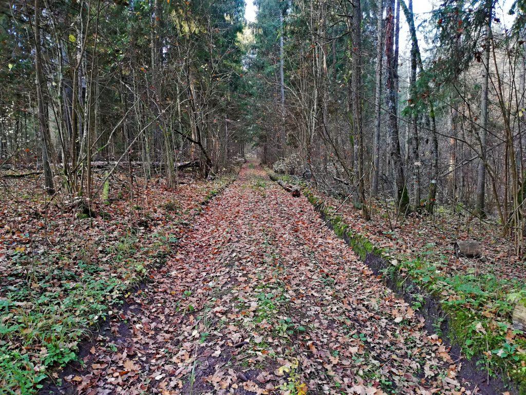 Miško kelias